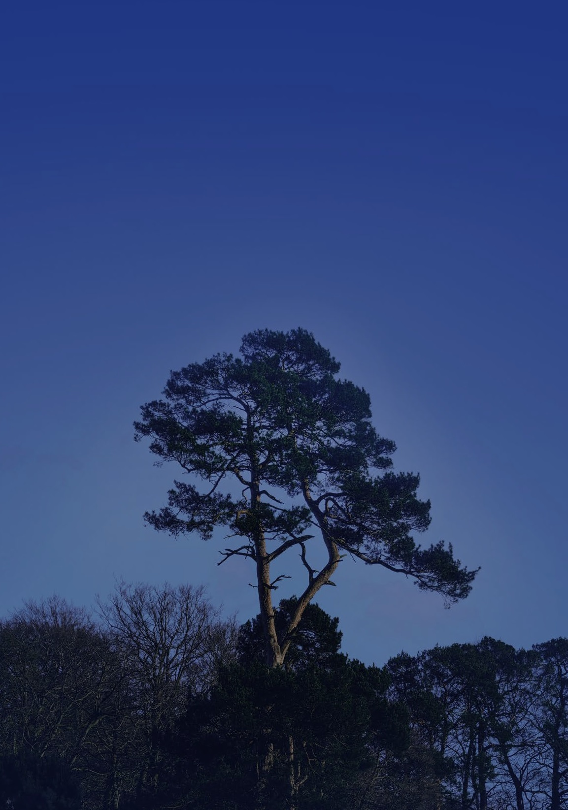 Pgt Tree