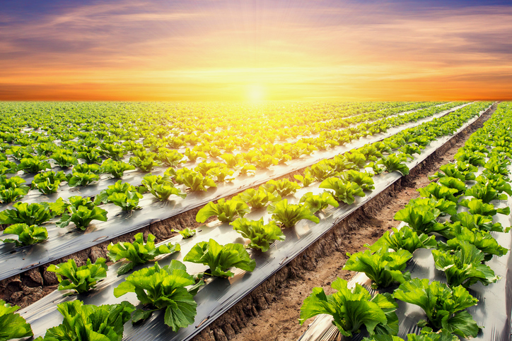 MBA Preview Day - The humble lettuce - and what it can teach us about supply chains and business strategy