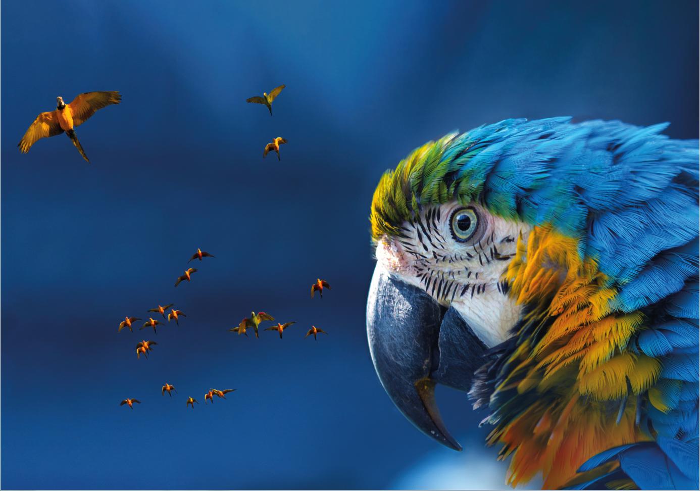 Single macaw mtime20200709145753